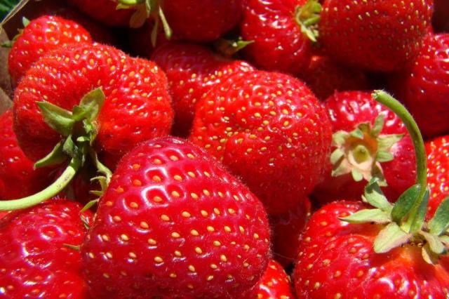 Mulheres que comem morangos sofrem declínio cognitivo mais lento Stock Photos/Divulgação