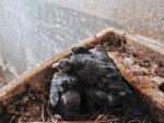 Tanque em obras paradas vira ninho de pomba