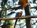 Entre os animais que podem ser vistos no zoo, estão espécies nativas ameaçadas de extinção
