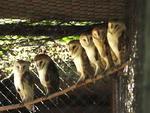 O Parque Zoológico possui um acervo de mais de mil animais