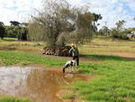 Sumiço da água, em virtude da seca no interior de Erechim