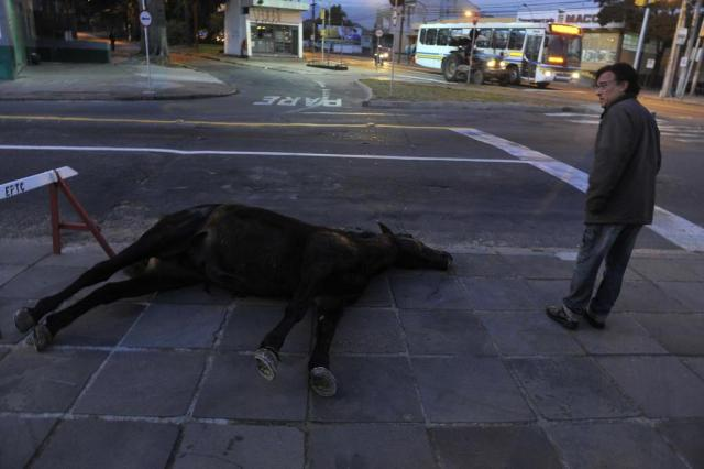 Cavalo é encontrado morto no bairro Glória, em Porto Alegre Bruno Alencastro/Agencia RBS