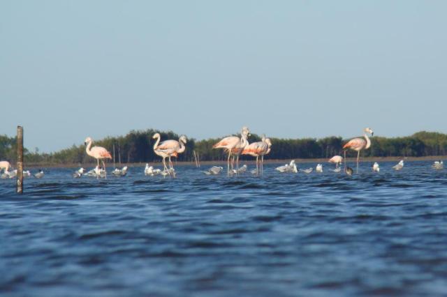 Lagoa do Peixe é atração no inverno seco João Batista/Especial