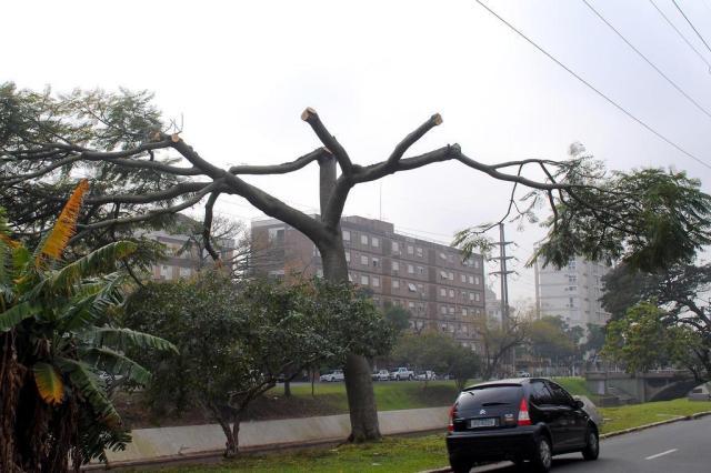 Smam autua a CEEE por poda irregular de árvores na Avenida Ipiranga Sérgio Louruz/PMPA,Divulgação