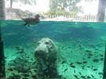 Interação com a natureza também é atração no Busch Gardens, em Tampa