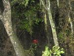 Buscas começaram depois que bote em que estavam dois bombeiros e um morador virou no Arroio Passo Grande, que fica às margens da BR-116, em Barra do Ribeiro