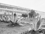 Presídio Central, 1981