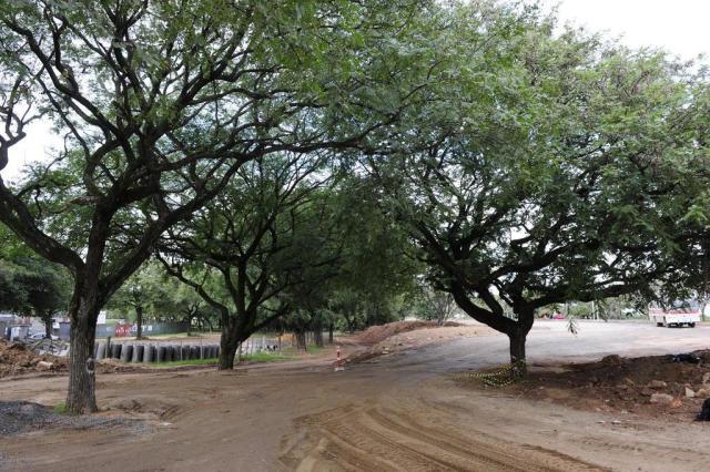 Prefeitura rompe negociação com grupo Ocupa Árvores Ronaldo Bernardi/Agencia RBS