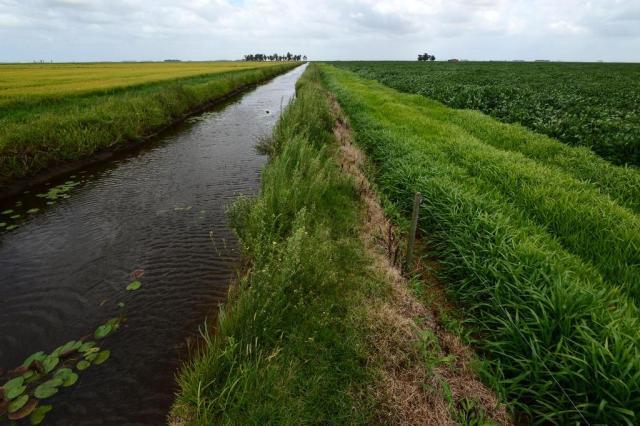 Em esquema de rotação de plantio, soja amplia a produtividade do arroz Tadeu Vilani/Agencia RBS