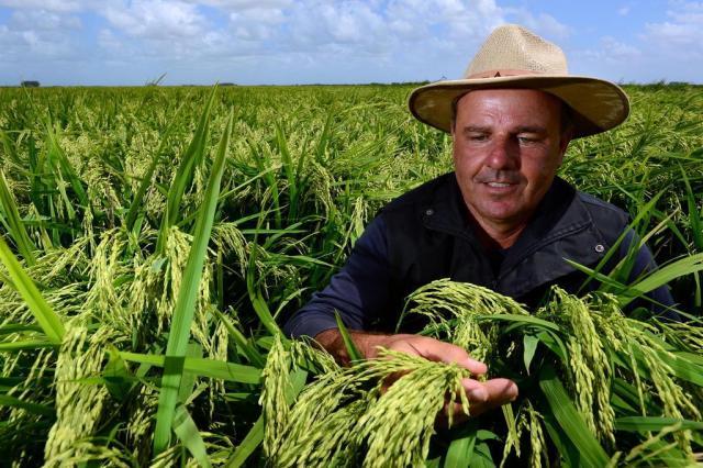 Propriedade em Mostardas mostra a razão do sucesso na produção de arroz Tadeu Vilani/Agencia RBS