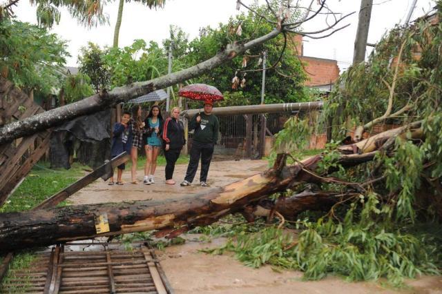 Árvore e poste caem sobre casa na zona norte de Porto Alegre Diogo Zanatta/Especial