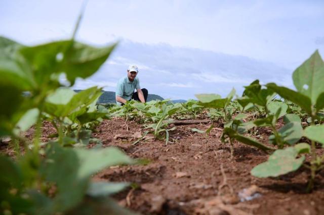 Mão de obra escassa e rendimento maior da soja desestimulam o plantio do feijão Ivo Skolaude/Especial