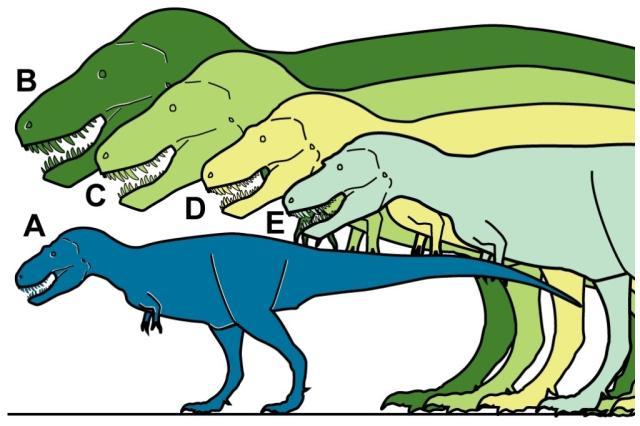Confundido com baleia, tiranossauro do tamanho de humano é descoberto no Alasca Anthony R. FiorilloRonald S. Tykoski/PLOSOne / Divulgação