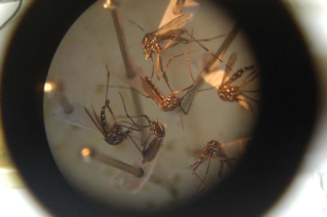 Casos de dengue no país caem 80% em janeiro e fevereiro Susi Padilha/Agencia RBS