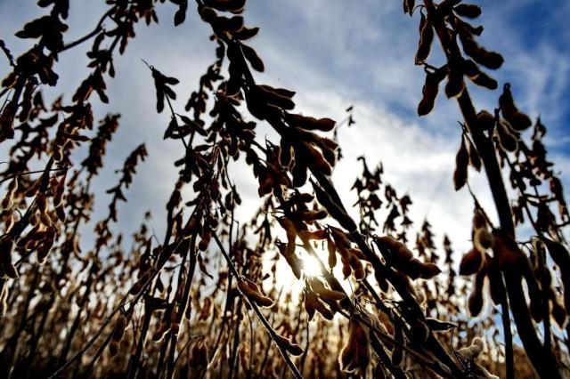 01-09-14 Emater prevê nova supersafra de grãos no Rio Grande do Sul