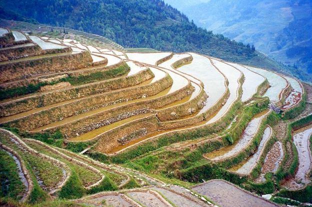 Estudo aponta agricultura como origem das diferenças culturais na China Doron/Creative Commons