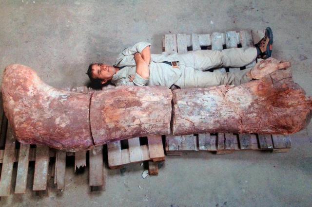 Maior dinossauro do mundo é descoberto na Argentina Museu Egidio Feruglio/TELAM / AFP