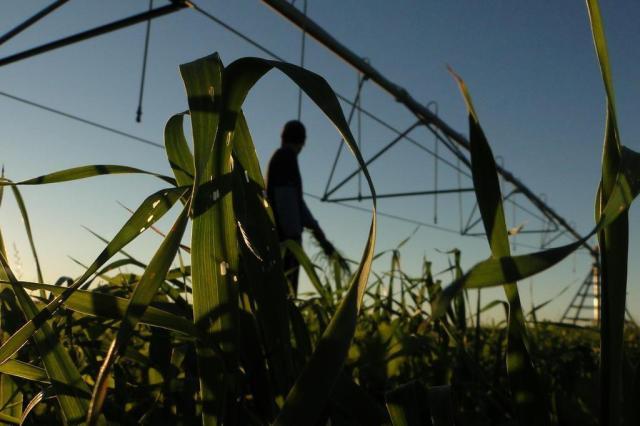 Projetos de irrigação estão represados no Rio Grande do Sul André Blodow/Especial