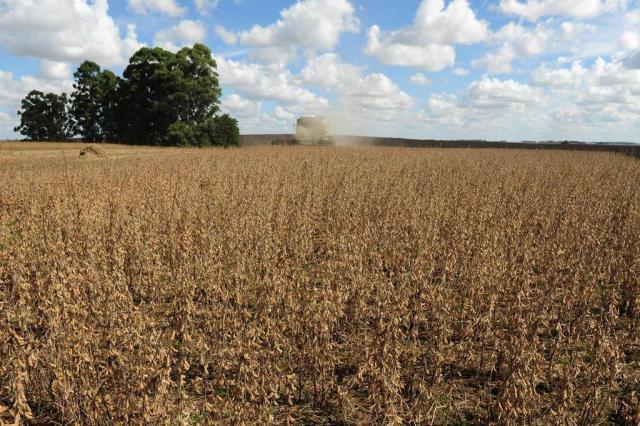 Gisele Loeblein: recuo da soja reflete impacto da produção dos EUA Fernando Gomes/Zero Hora