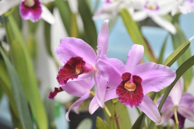 Conheça dez espécies de plantas que removem poluentes do ar Rodrigo Philipps/Agencia RBS