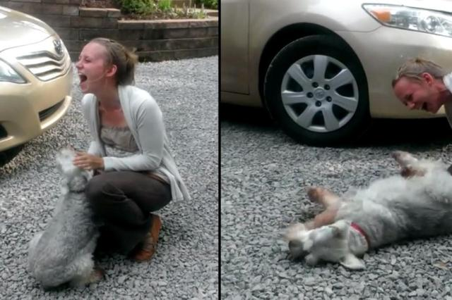 Saiba o que pode explicar caso do cão que desmaiou ao rever dona Youtube/Reprodução
