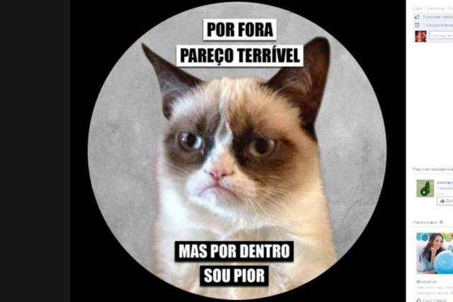 Grumpy Cat lança livro no Brasil: confira 5 momentos do bichano  Reprodução/Agência RBS