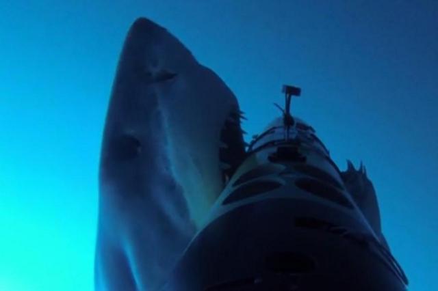 Câmera instalada no fundo do mar dá ideia de como é ser atacado por tubarão branco Woods Hole Oceanographic Institute/Reprodução