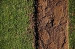 Grêmio vai vender pedaços da grama do Olímpico emoldurados