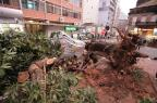Queda de árvore bloqueia rua no Centro de Porto Alegre (Ricardo Duarte/Agencia RBS)