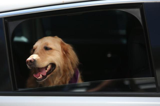 Aprenda a transportar seu pet com segurança Diego Vara/Agencia RBS