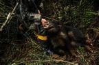 Reportagem faz expedição fotográfica e fica frente a frente com o predador Carlos Macedo/Agencia RBS