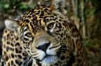 Planeta perde metade de sua fauna nos últimos 40 anos Halder Ramos/GramadoZoo