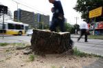 Árvores foram removidas para a obra do binário da Praia de Belas-Borges de Medeiros