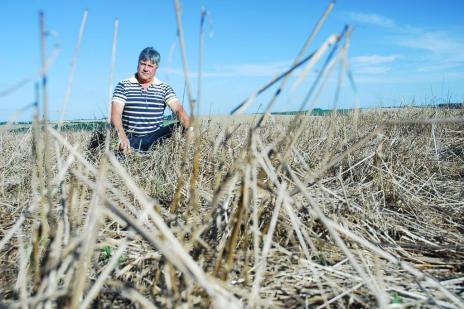 Redução no valor da soja pode resultar em lucro R$ 2 bilhões menor para os produtores gaúchos (Fernando Gomes/Especial)