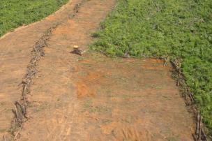 Reduzir desmatamento não é suficiente para garantir funções climáticas da Amazônia Divulgação/Ver Descrição