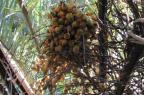 Lista revela 804 espécies de plantas sob risco de extinção no Estado Luís Rios de Moura Baptista/Flora Digital