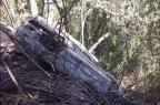 Homem que morreu carbonizado em acidente é identificado em Caxias do Sul Porthus Junior/Agência RBS/