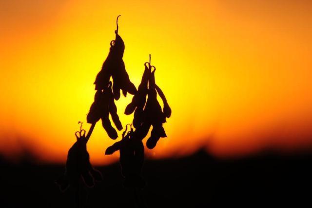 Cultivada há cem anos no país, soja deve gerar R$ 45,2 bi no RS em 2015 Tadeu Vilani/Agencia RBS