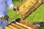 Produção de mel em queda