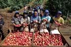 Índios viajam de Mato Grosso do Sul a Vacaria para trabalhar na colheita da maçã Lauro Alves/Agencia RBS