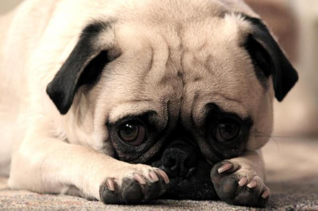 Descubra que alimentos você não pode compartilhar com o seu pet (reprodução/reprodução)