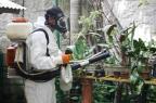 Um quarto dos municípios gaúchos tem infestação do mosquito da dengue Betina Carcuchinski/Divulgação/PMPA