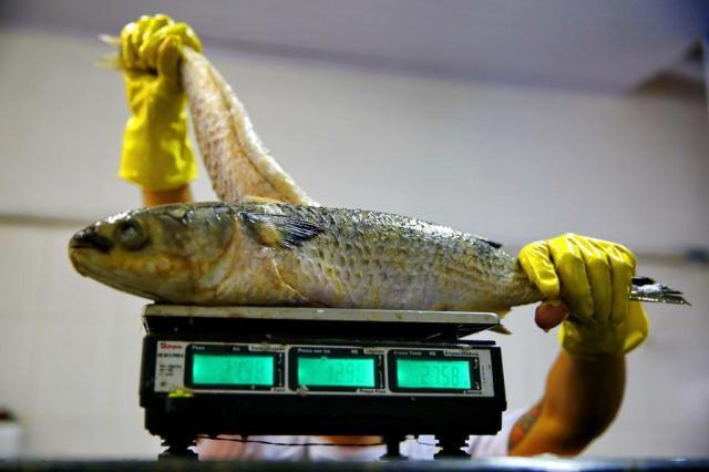 Descubra qual o pescado certo para cada tipo de prato Adriana Franciosi/Agencia RBS