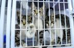 Cães e gatos não pagarão passagem para andar em ônibus em Porto Alegre Germano Rorato/Agencia RBS