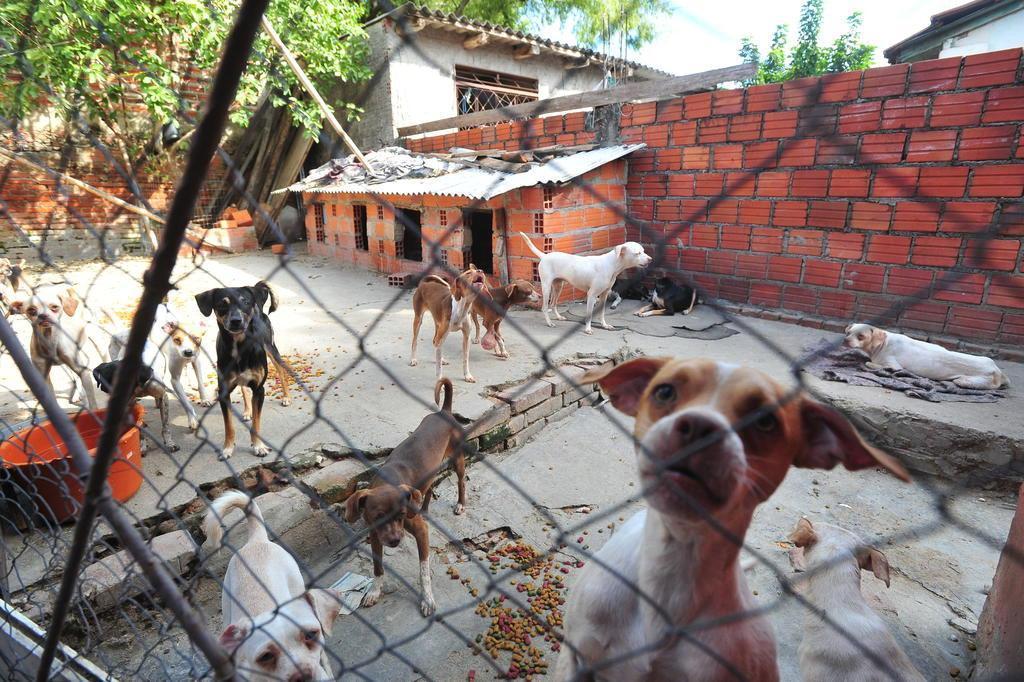 Tutora de 80 cães morre e voluntários procuram novos lares para os animais Jean Pimentel/Agencia RBS