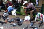 População estimula permanência dos pombos nas praças de Caxias do Sul Roni Rigon/Agencia RBS