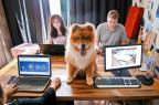Empresas apostam em animais de estimação no trabalho para melhorar o ambiente e o potencial criativo (Alvarélio Kurossu/Agencia RBS)