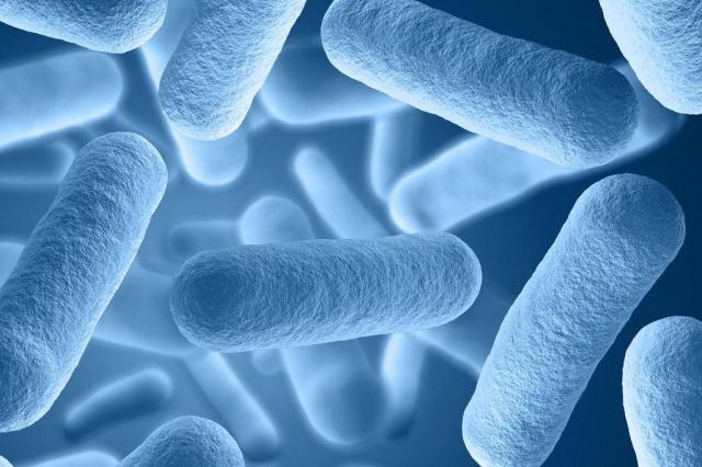 ONU pede mobilização geral contra resistência aos antibióticos StudioSmart/Shutterstock