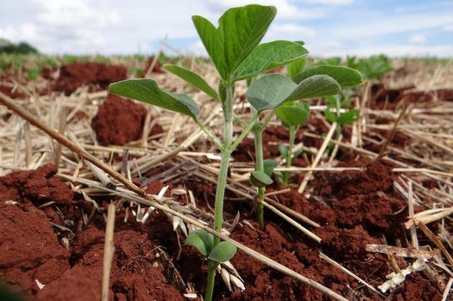 Estudo aponta que estratégia para comprar fertilizante pode ser diferencial de lucro da próxima safra José Schafer/Emater,divulgação