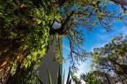 Lista de árvores tombadas em Porto Alegre é atualizada sem incluir novos exemplares Omar Freitas/Agencia RBS
